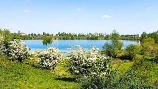 Крупный лещ на озере