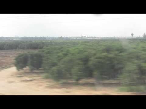 Citrus orchards near Ramle and Lod, Israel as seen from the train window to Beer Sheva