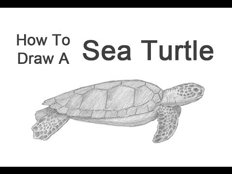 How to draw a green sea turtle youtube