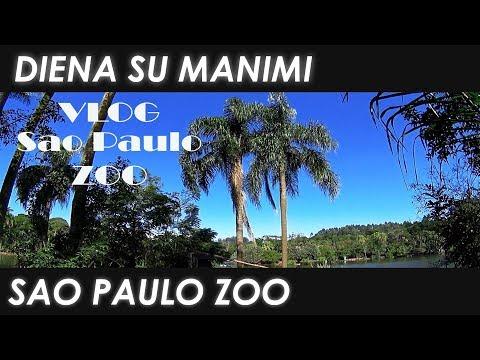 DIENA SU MANIMI: Liūtai ir drambliai | Sao Paulo ZOO | Justes Grozio  Kanalas