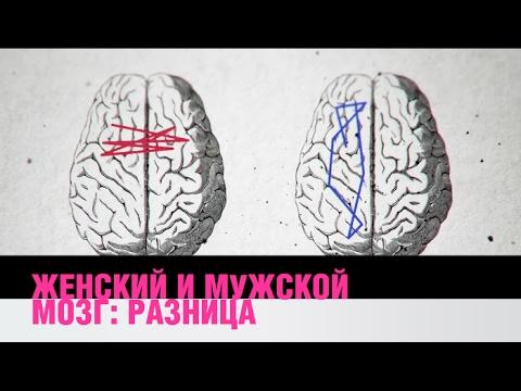 Разница между женским и мужским мозгомиз YouTube · Длительность: 3 мин13 с