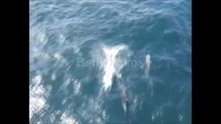 Delfini delfinaki - Kalatzis Giannis.