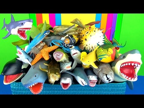 Learn Sea Animals Names Sharks Whales Fish - Jaws - Kids Educational Toys - in English