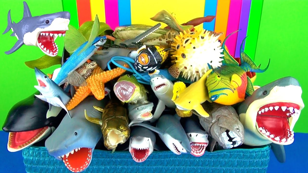 Learn sea animals names sharks whales fish jaws kids for Swimming fish cat toy