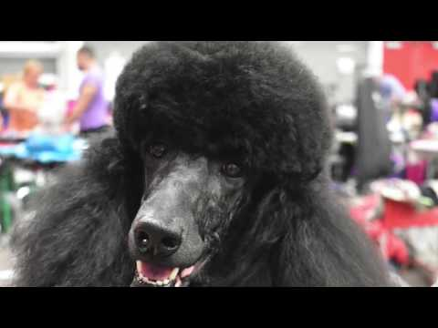 PCA 2018 Grooming Competition