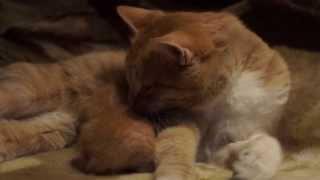 Папа и котенок