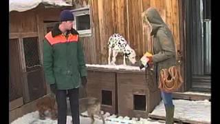 В Братском приюте для собак оказался породистый далматин