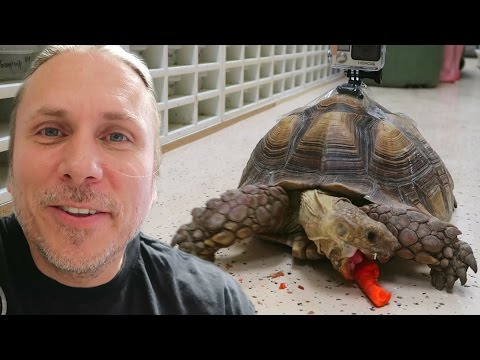 What My Tortoise Does When I'm Not Around! (GoPro) | BRIAN BARCZYK
