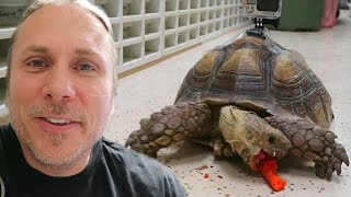 What My Tortoise Does When I'm Not Around! (GoPro) Brian Barczyk thumbnail