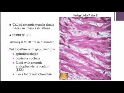Muscle Tissue Screen Cast
