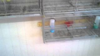 East Coast Florida Birds Parrots Sale