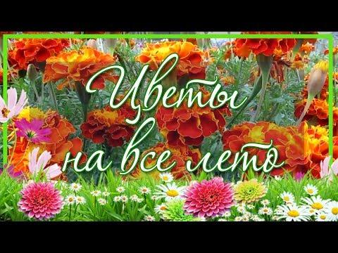 💡 Бархатцы. Цветы на всё лето, без рассады 💜