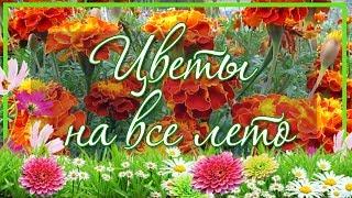 Бархатцы. Цветы на всё лето, без рассады(Природа подарила нам огромное количество разнообразных цветов на любой вкус. Конечно, хочется их всех поса..., 2016-02-01T12:28:20.000Z)