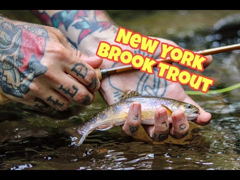 How To: Fly Fishing For Brook Trout In The Catskills