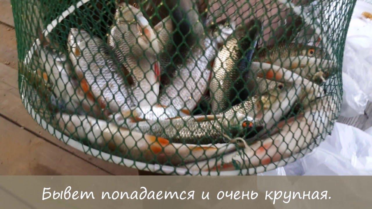 Свой пруд на участке. Разведение рыбы на своём участке.