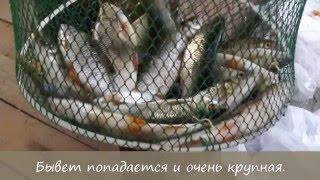 Свой пруд на участке. Разведение рыбы на своём участке.(Если ваша мечта создать естественный пруд на своём участке, то это видео для вас. Размеры: 12 на 12 метров,..., 2015-10-02T20:32:30.000Z)