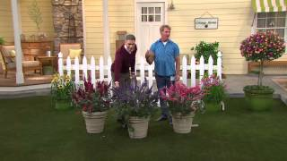 Cottage Farms 3-piece Garden Idols Butterfly Bush Collection with Alberti Popaj