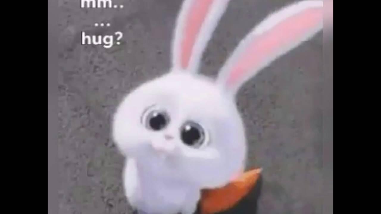 bunny eyes cute youtube