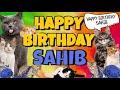 Happy Birthday Sahib! Crazy Cats Say Happy Birthday Sahib (Very Funny)