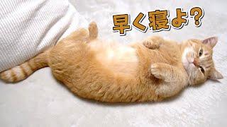 一緒にベッドで寝るのが待ちきれない甘えん坊猫!