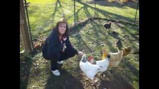 The Best Chicken Coop - Update #3