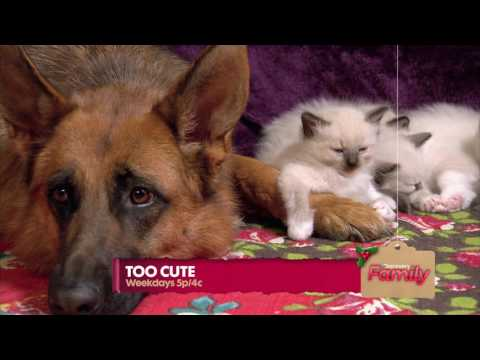 DISCOVERY FAMILY - TOO CUTE (PROMO)