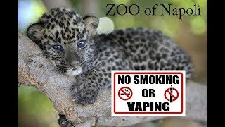 ANIMALS NEVER CHOOSE TO SMOKE - Funny Animals Reactions in The Zoo of Napoli - Napoli Zoo in ITALY