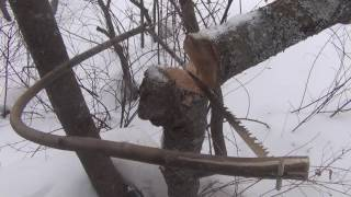 Выживание в тайге. Смерть в сугробе. Охота за березовым капом и березовым сувелем и чагой. Сибирь.