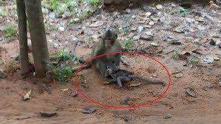 Baixar Crazy Monkey Hitting Baby Very Bad, Bay Cry and So Cry Daily Monkeys Man #632