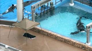 Common Myths about Dolphin and Whale Captivity