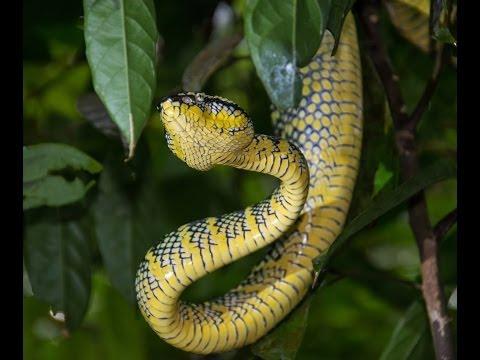Singapore Snakes