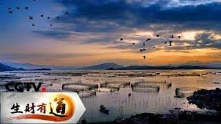 《生财有道》 20171221 生态中国系列(沿海行)——福建霞浦 蓝色牧场财富多 | CCTV财经