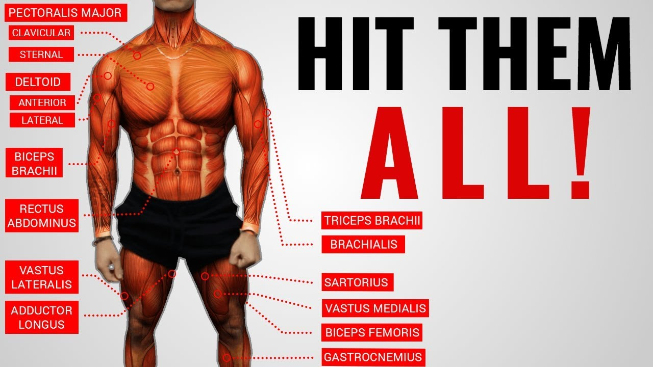 """The Best Science-Based Full Body Workout for Growth (WORKOUT """"A"""")"""