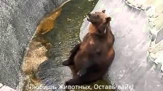 Животные онлайн. Медведь отвечает жестом