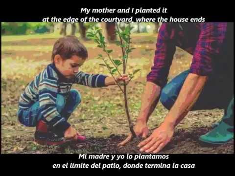 Alberto Cortez - Mi árbol y yo (Letra/Lyrics)