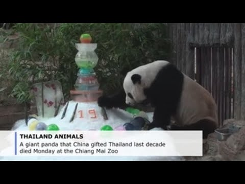 Giant Panda's Sudden Death in Thai Zoo Sparks Anger in China