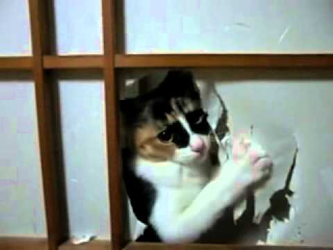 Mickey_Mouse_Cartoons_Temple_-_Tortoiseshell_cat_and_Japanes.flv