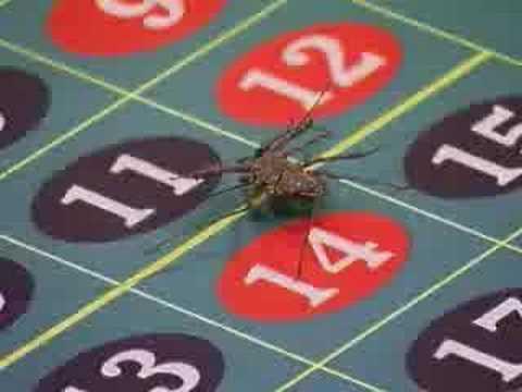 Fear factor casino spider casino listings mega fortune dreams
