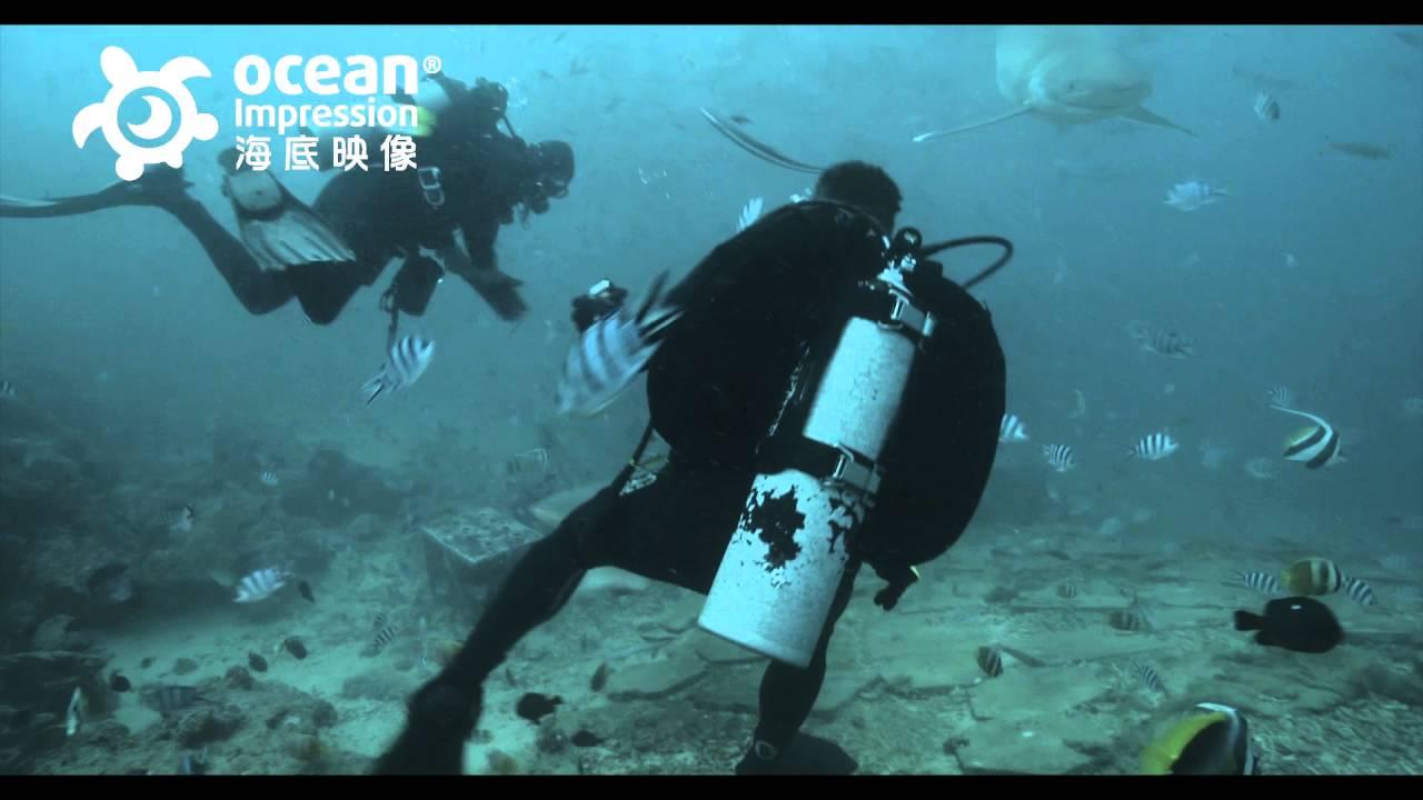 斐濟 鯊很大