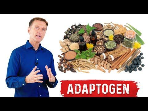 What is an Adaptogen?
