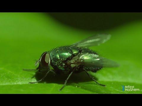 토라에 담긴 하늘에서 온 지식: 구전토라에 나와 있는 곤충과 전염병(1분) Divine Knowledge in Torah: Insects & Infectious Diseases