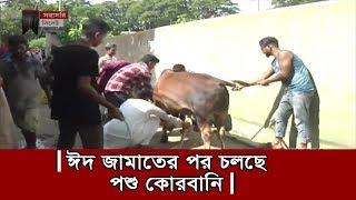 ঈদ জামাতের পর চলছে পশু কোরবানি | Eid Ul Adha 2019 | Somoy TV