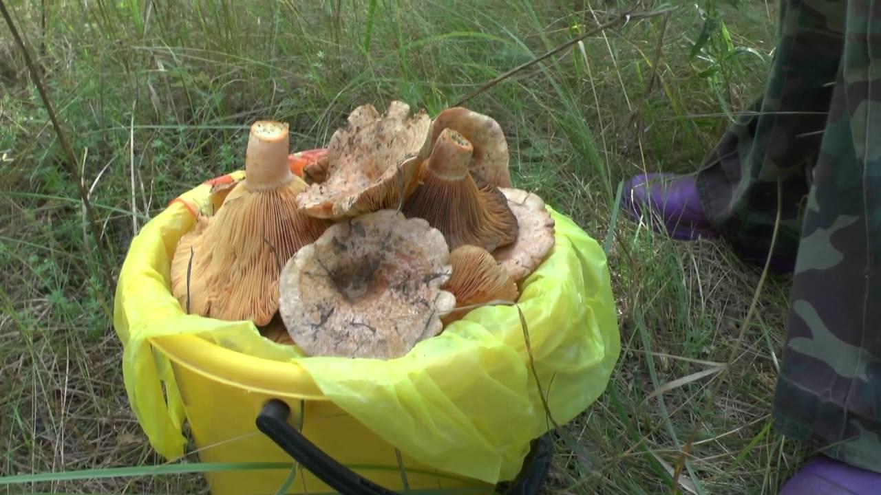 15 май 2016. Обзор электрической сушилки для грибов, овощей, фруктов