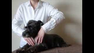 Japan Pet Massage Association・BASIC ROUTINE (Member2)