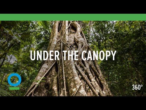 Under The Canopy (360 video)   Conservation International (CI)