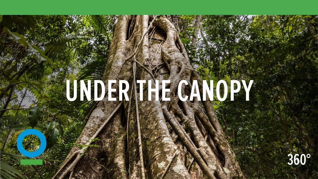 Under The Canopy (360 video) | Conservation International (CI) - YouTube & Under The Canopy (360 video) | Conservation International (CI ...