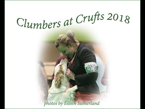 Clumbers at Crufts 2018