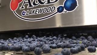 Milbor PMC - Rotary Blower cleaning blueberries