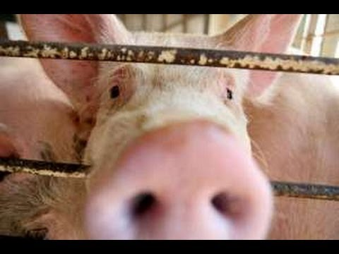 Factory Farming, Fracking, & 49ers (The Point)