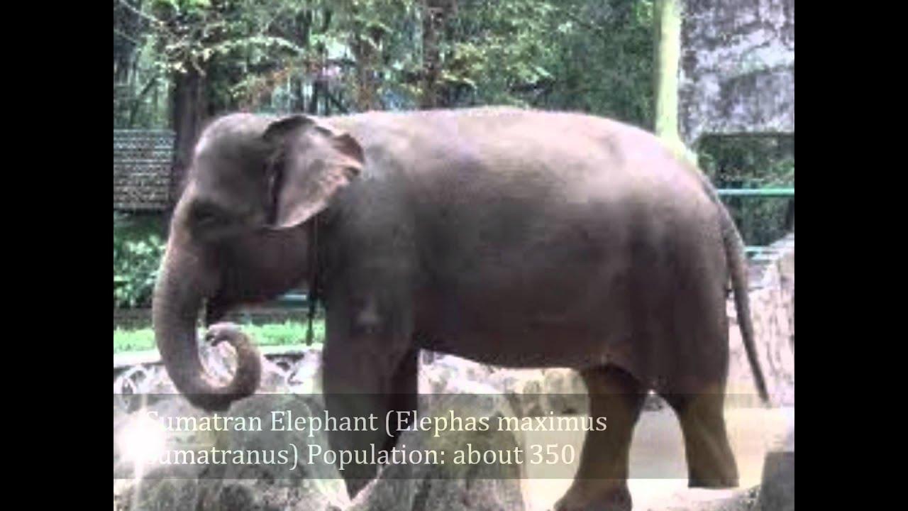 Endangered and extinct animal species 77
